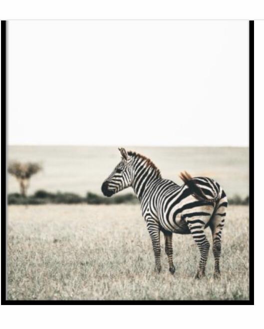 zebra fun facts